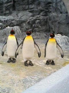 ペンギンの巻。