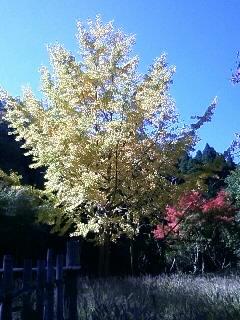 秋を感じる。