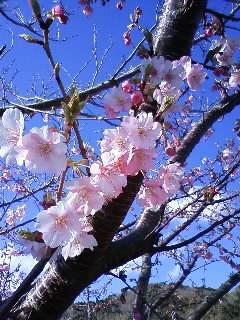桜まつり、梅まつり。