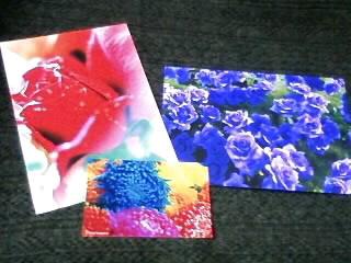 地上の花、天上の色